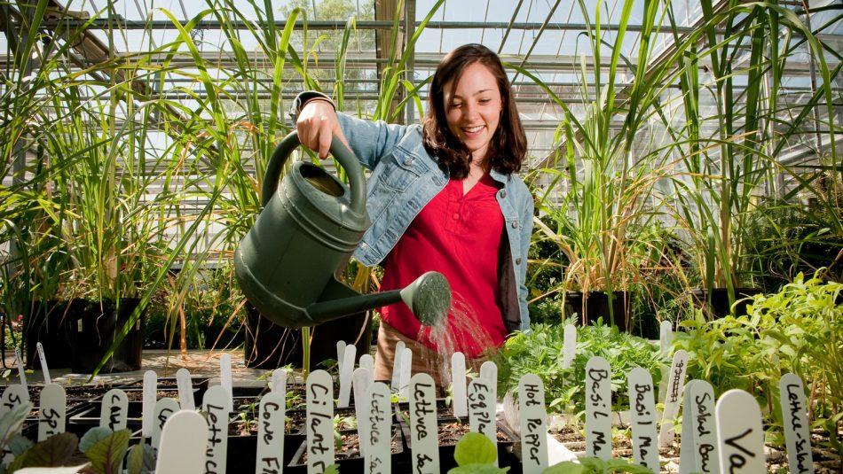 faculty watering plants