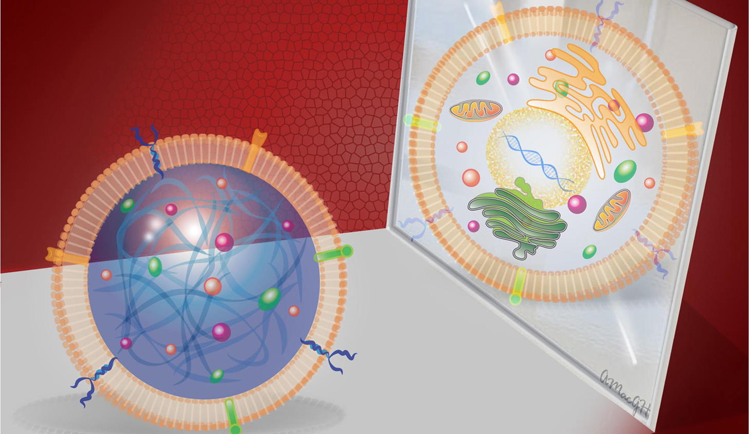 synthetic stem cells