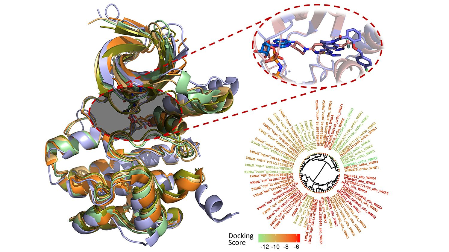 computer modeling of WNK kinase inhibitors